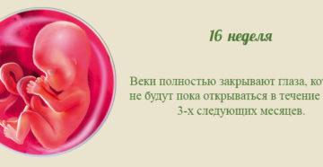 16 неделя беременности. Календарь беременности