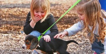 Домашние питомцы: воспитываем ответственность в ребенке? Или в себе?