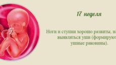 17 неделя беременности. Календарь беременности