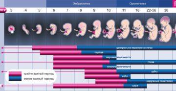 23 неделя беременности. Календарь беременности
