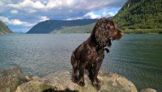 Путешествие в Финляндию и Норвегию на машине с собакой. Какие документы нужны? [видео]